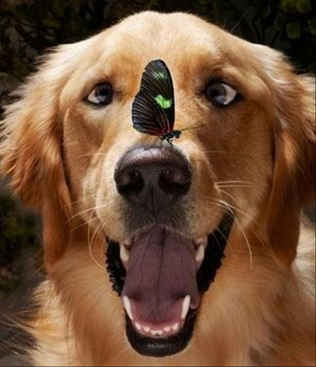 dogs-funny-faces-butterfly.jpg