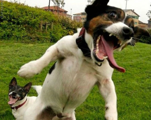 dogs-funny-faces-jumping.jpg