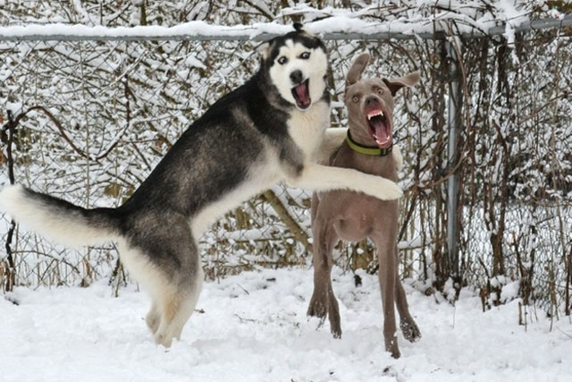 dogs-funny-faces-playing.jpg