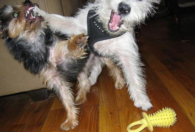 dogs-funny-faces-punch.jpg
