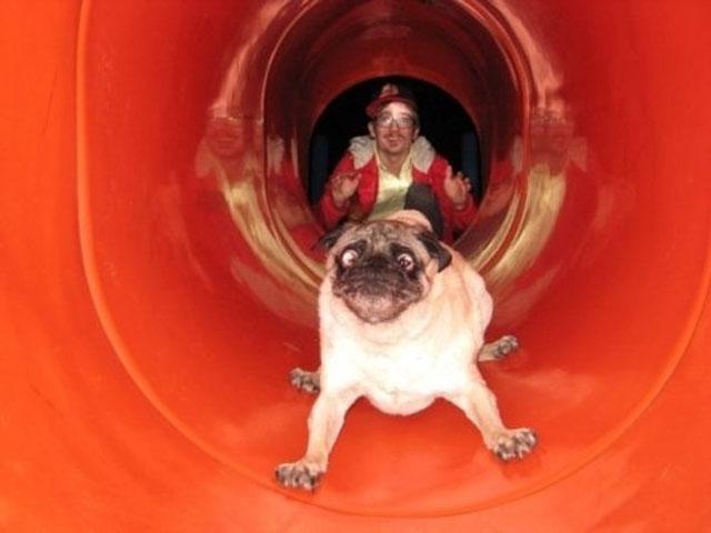 dogs-funny-faces-slide.jpg