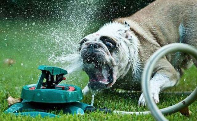 dogs-funny-faces-sprinkler.jpg