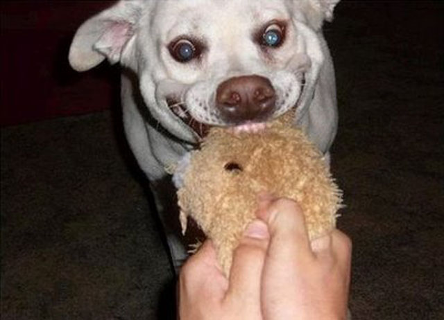 dogs-funny-faces-toy.jpg