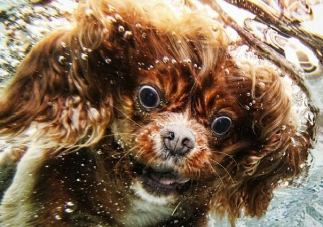 dogs-funny-faces-underwater-1.jpg