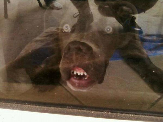 dogs-funny-faces-window.jpeg