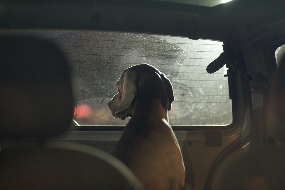dogs-in-cars-by-martin-usborne-14.jpg