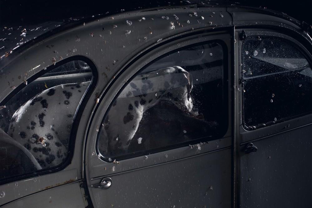 dogs-in-cars-by-martin-usborne-gessato-gblog-27.jpg