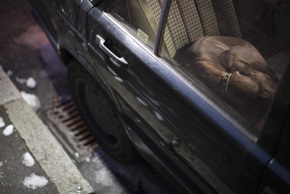 dogs-in-cars-by-martin-usborne-gessato-gblog-36.jpg