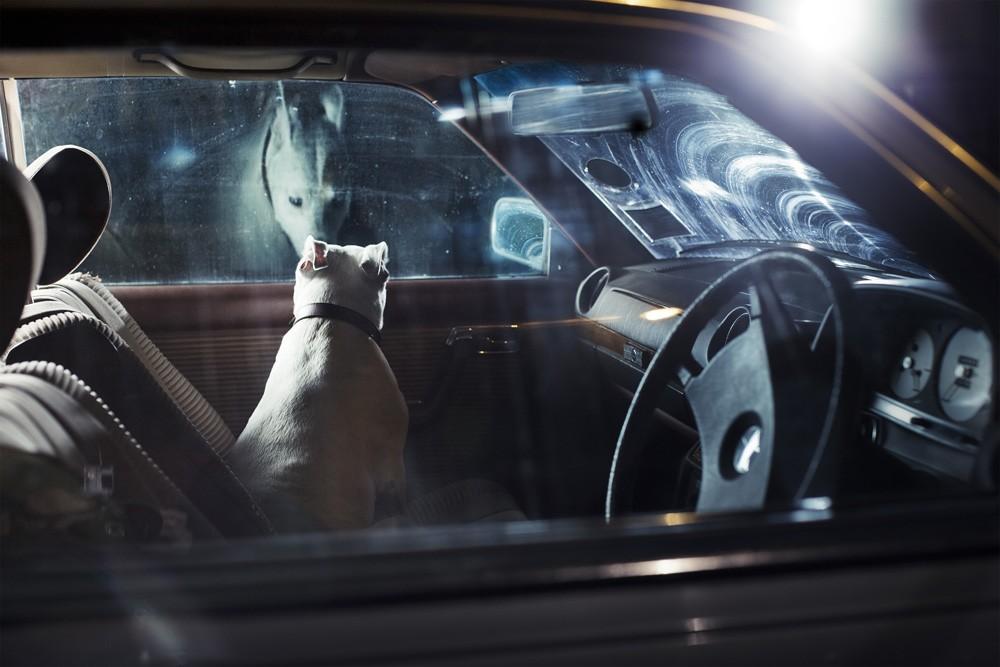 dogs-in-cars-by-martin-usborne-gessato-gblog-8.jpg