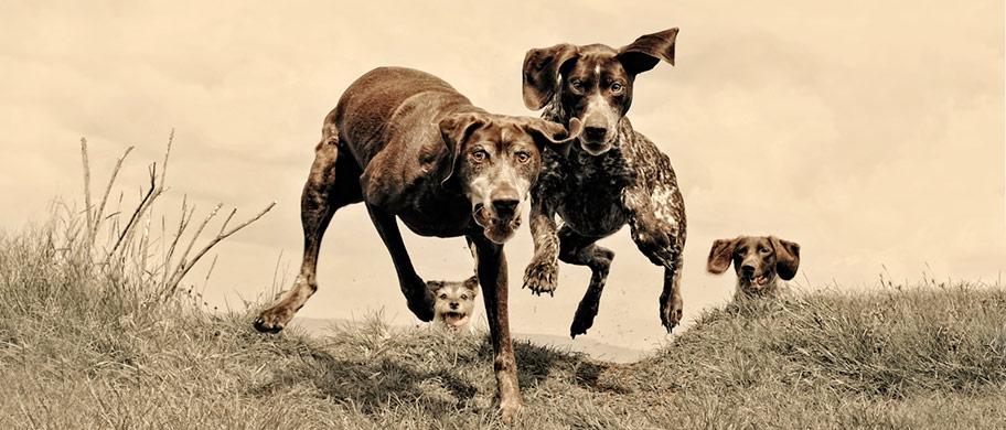 dogsrunning.jpg