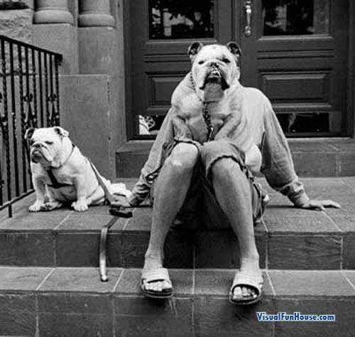 dogwalkdog.jpg