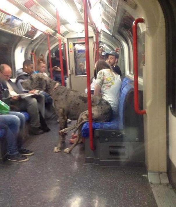 funny-animals-doing-human-things-30.jpg