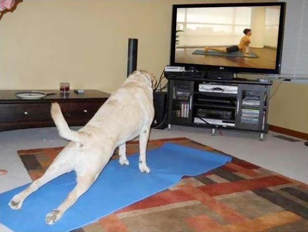 funny-animals-doing-yoga-17.jpg