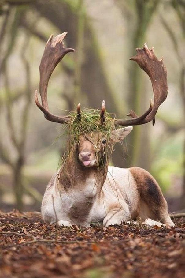 funny-derpy-animals-13.jpg