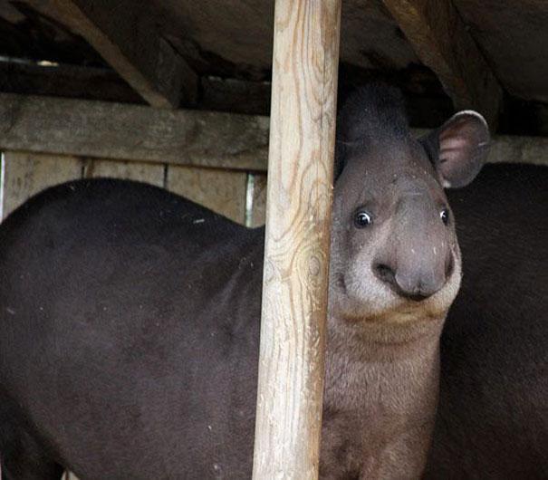 funny-derpy-animals-29.jpg