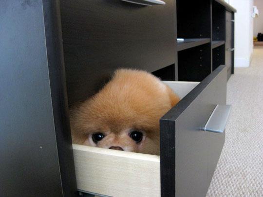 funny-dog-file-cabinet.jpg