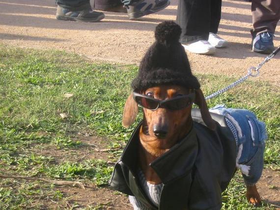 funny-dogs051.jpg