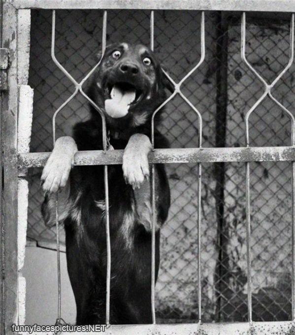 funny-faces-crazy_eyes_dog.jpg