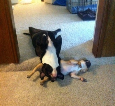 funny-sleeping-animals-dogs-09.jpg