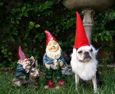 garden-gnome-dog.jpg