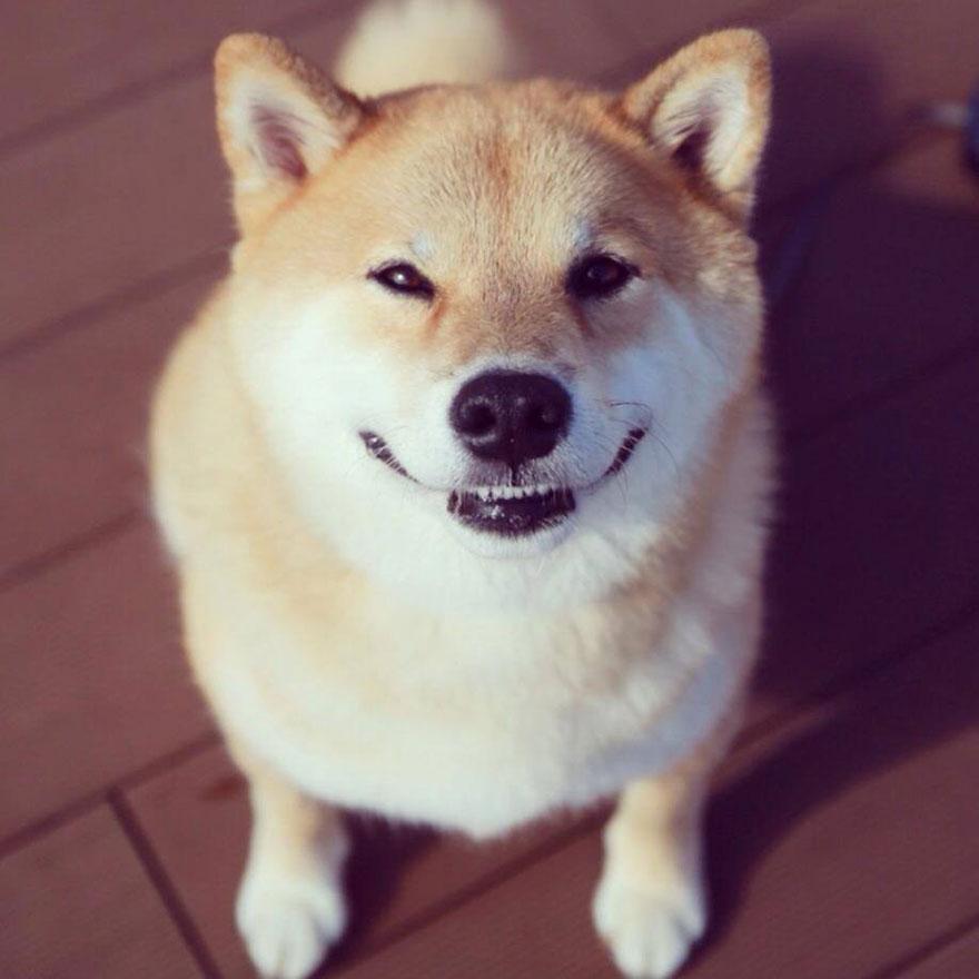 happy-dog-maru-shiba-inu-11.jpg