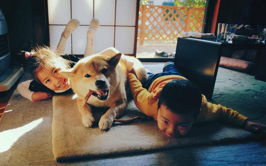 happy-dog-maru-shiba-inu-13.jpg