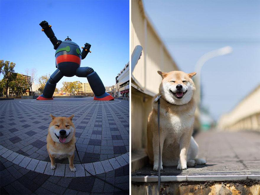 happy-dog-maru-shiba-inu-39.jpg