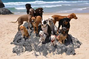 happy_dogs_in_australia.jpg