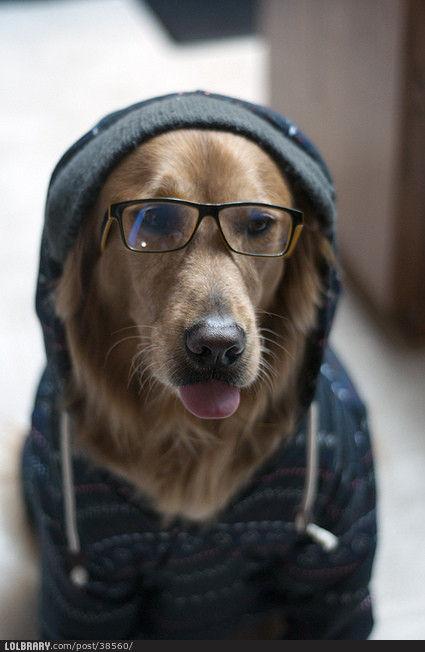 hoodie-pup.jpg