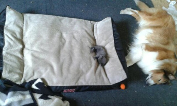 kitten-steals-bed-612x366.jpg