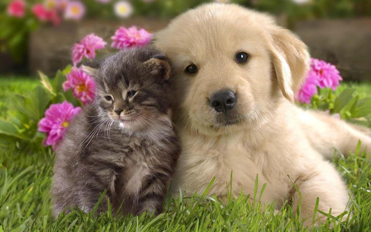 kutya-macska.jpg