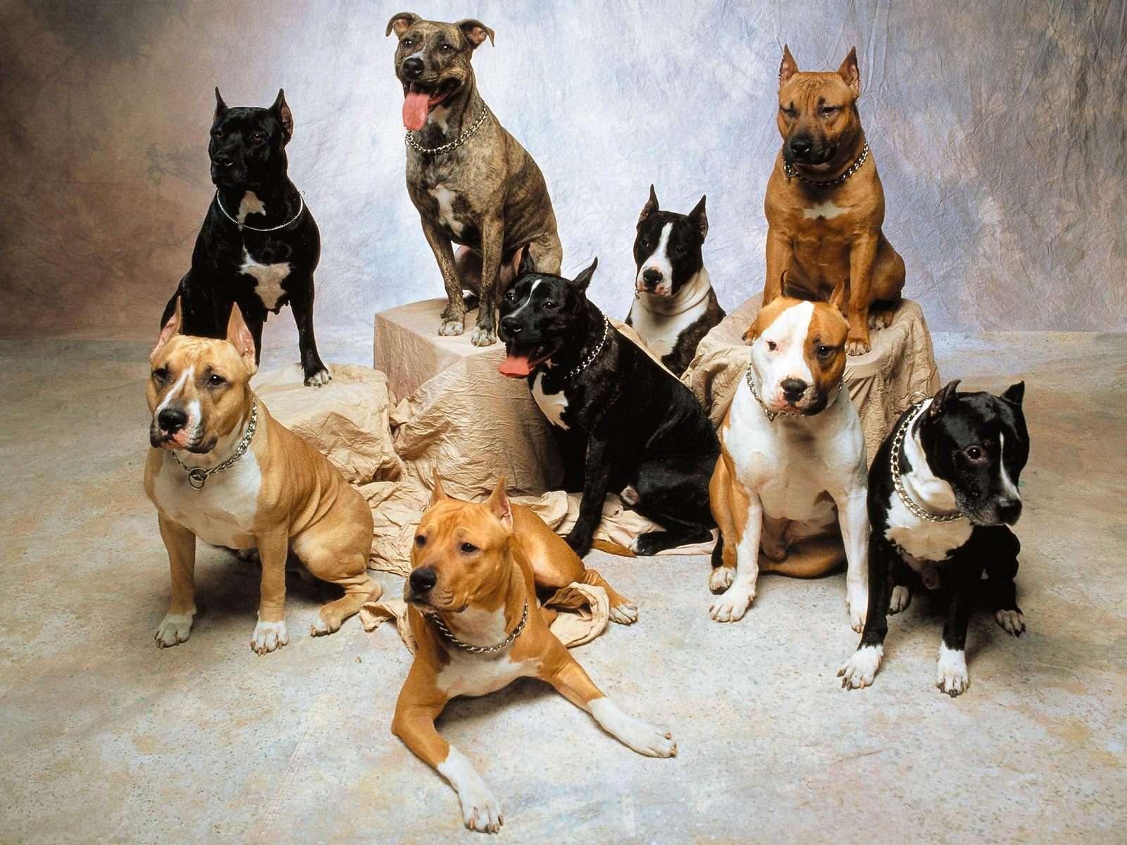 kutyusok.jpg