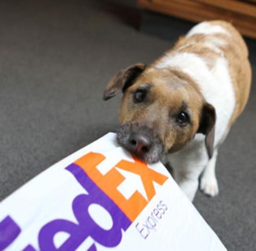 maildog.jpg