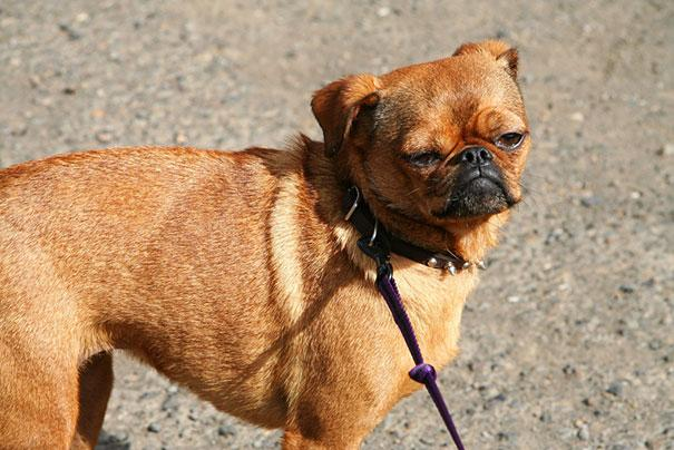 mixed-breed-dogs-12.jpg