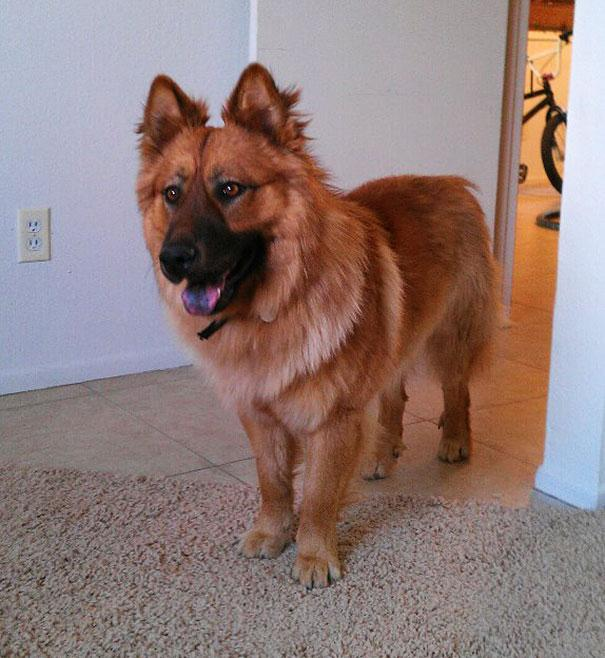 mixed-breed-dogs-13.jpg