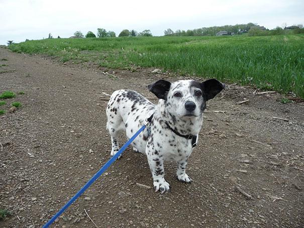 mixed-breed-dogs-21.jpg