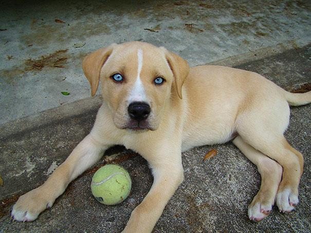 mixed-breed-dogs-9.jpg