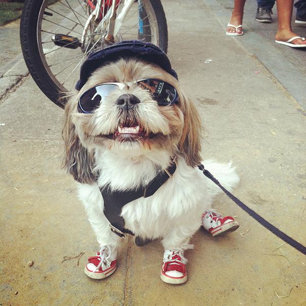 nycdog.jpg