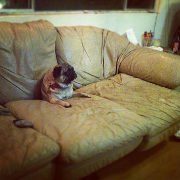 o9i4t-funny-cats-dogs-stuck-furniture-11.jpg
