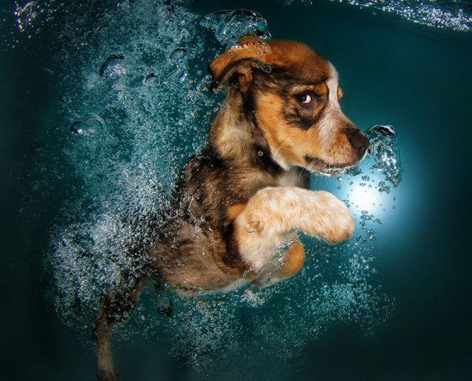 pancsoló kutyusok 10.jpg