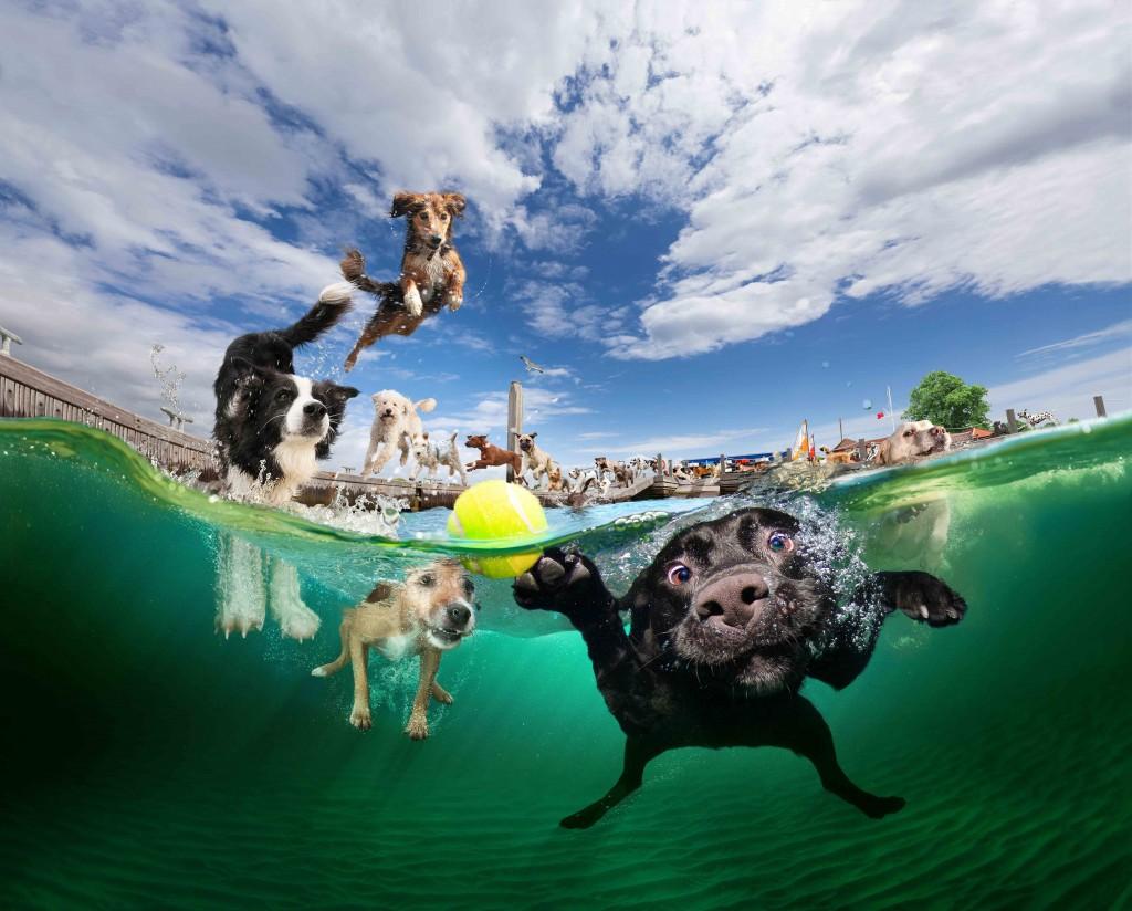 pancsoló kutyusok 3.jpg