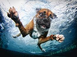 pancsoló kutyusok 8.jpg