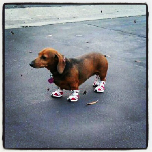 puppy-sneakers-500x500.jpg