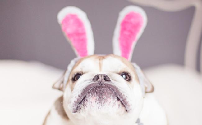 rabbitears2.jpg