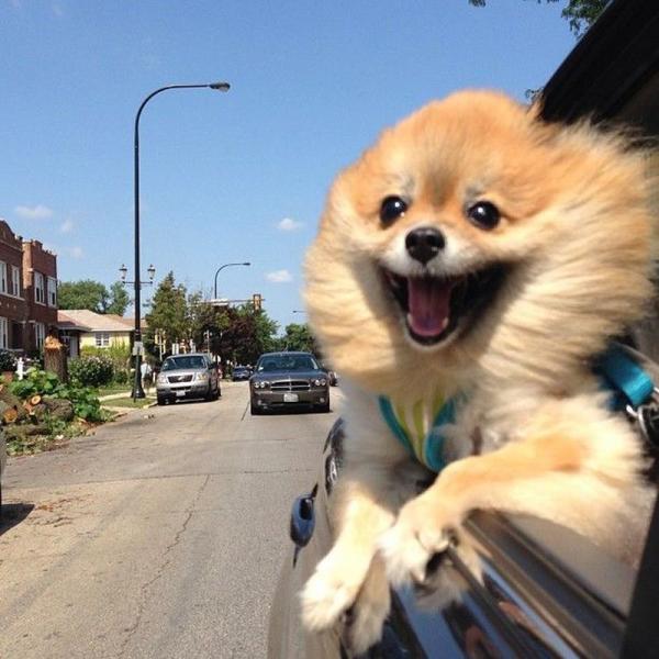 ridiculous-funny-animals-car-dog.jpg
