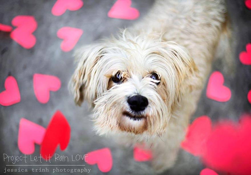 shelter-dog-photos-let-it-rain-love-jessica-trinh-2.jpg
