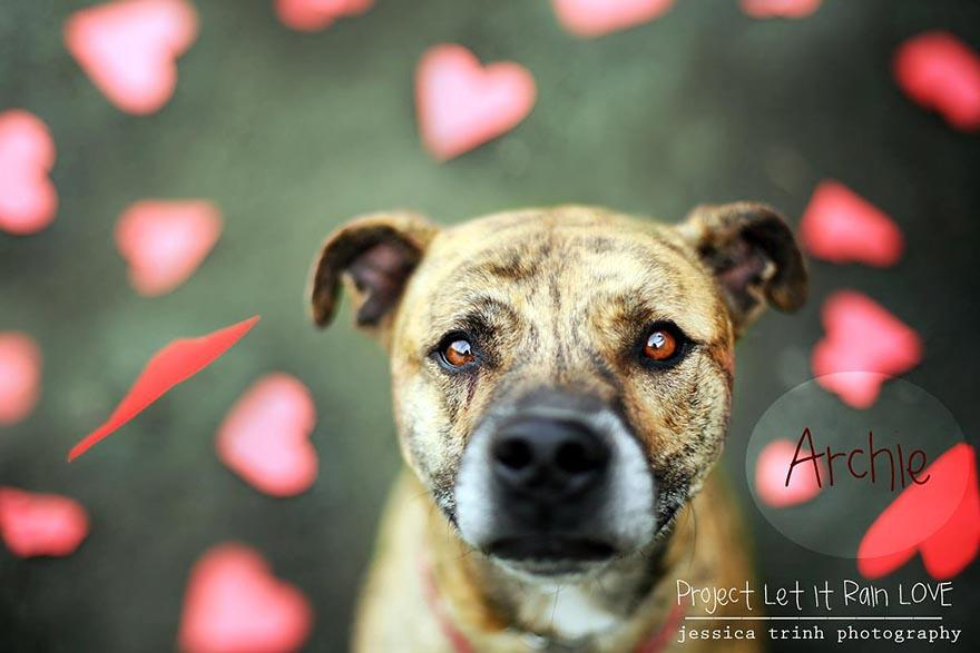 shelter-dog-photos-let-it-rain-love-jessica-trinh-3.jpg