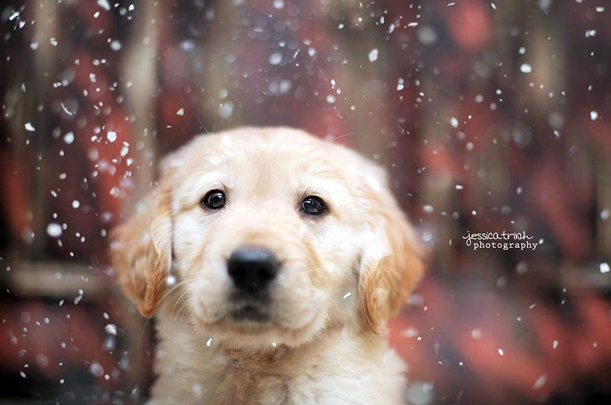 shelter-dog-photos-let-it-rain-love-jessica-trinh-35.jpg