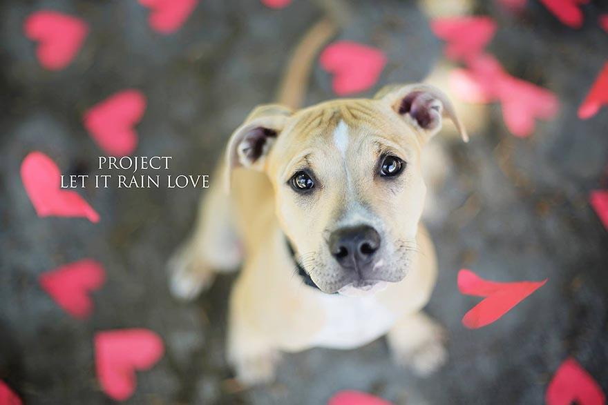 shelter-dog-photos-let-it-rain-love-jessica-trinh-5.jpg