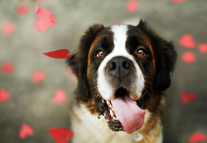 shelter-dog-photos-let-it-rain-love-jessica-trinh-6.jpg